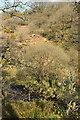 SX6675 : East Dart valley west of Babeny by Derek Harper