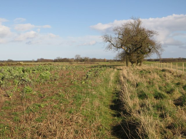 Public footpath west of Ulgham