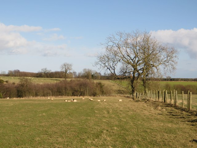 Grass field and public footpath