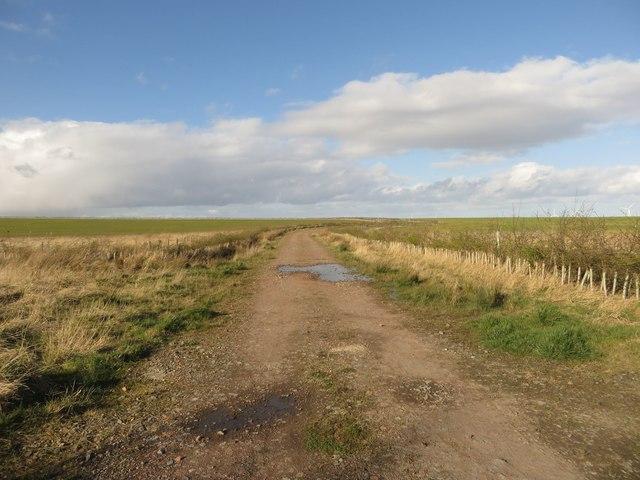 Farm track at Ulgham Park