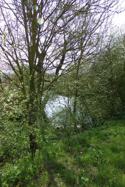 Pond off Lovers Lane Footpath