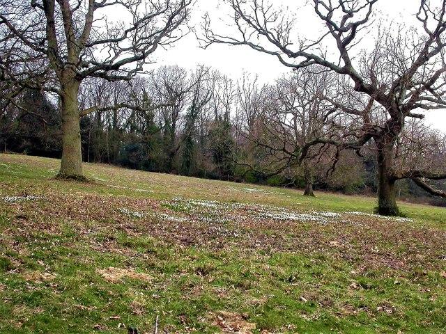Wood pasture in St Helen's Park