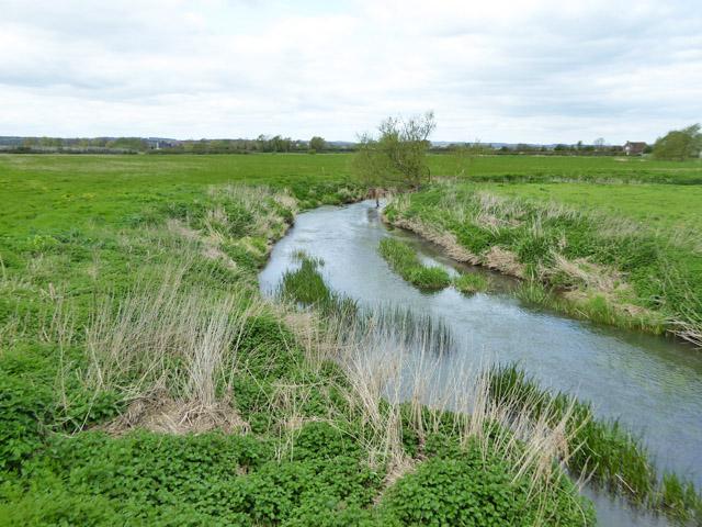 River Stour below Mill Lane bridge