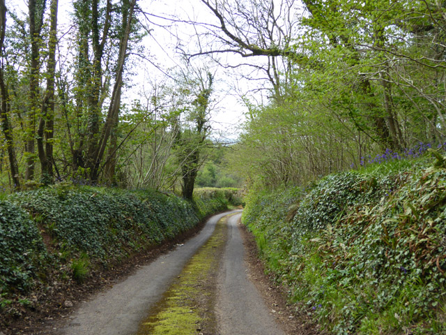 Ham Lane descends towards Croscombe