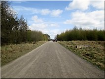 SE8094 : A  long  straight  on  Brown  Howe  Road by Martin Dawes