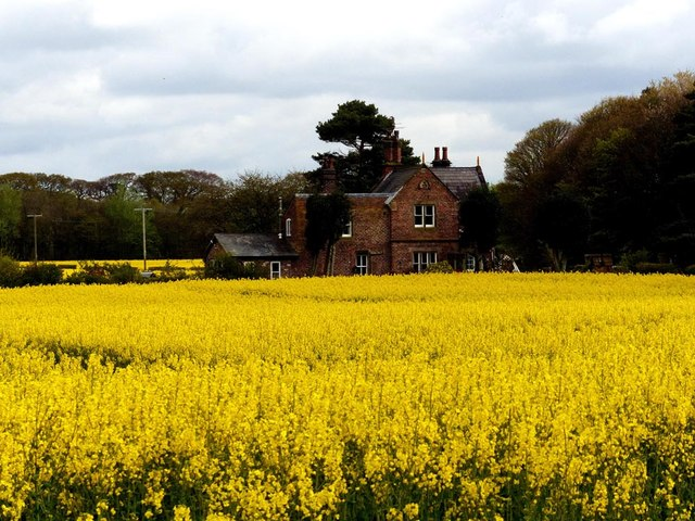 Sunnyfield cottage and field of rapeseed