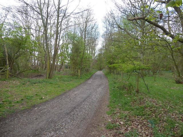 Suffolk Coast Path through Dunwich Forest
