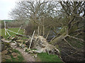 SD5486 : Fallen tree, Peasey Beck by Karl and Ali