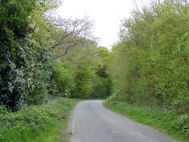Lane by Tredgell's Wood