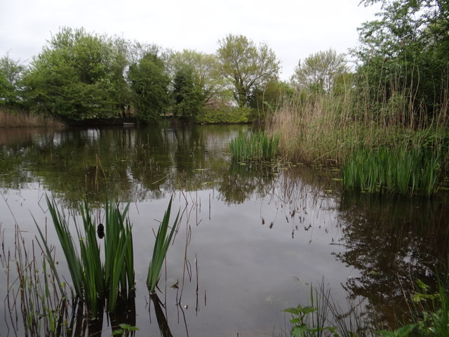 Large pond at Brick Pits nature reserve