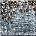 ST2885 : Acer leaves and scaffolding by Robin Drayton