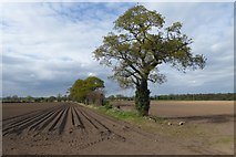 SE6548 : Ploughed fields near Langwith Lodge by DS Pugh