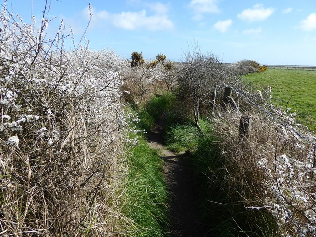 Coastal path, Pagham Harbour