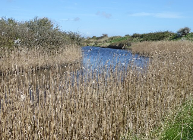 Watercourse and reeds near Pagham Wall