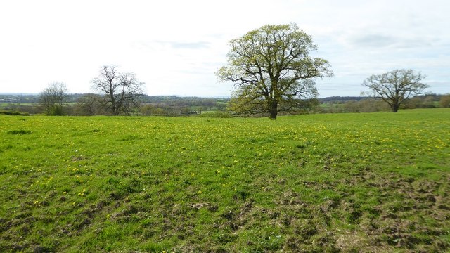 Trees in a field on Cruise Hill