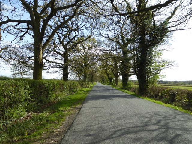 Tree-lined road