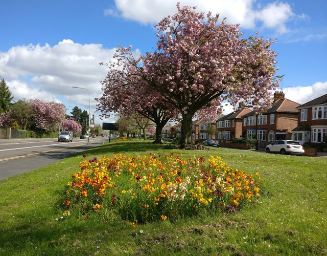 Flowers and blossom along Aylestone Road