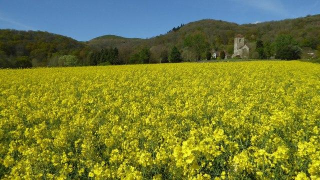 Oilseed rape and Little Malvern Priory