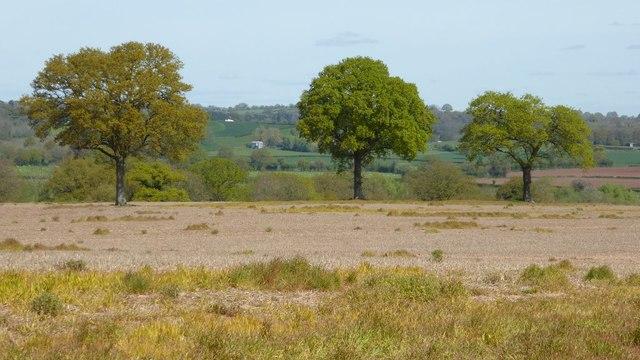 Trees in farmland
