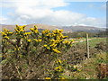 NN1175 : Gorse on the Great Glen Way by M J Richardson