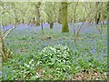 SU0019 : Garston Wood, blue and white by Mike Faherty