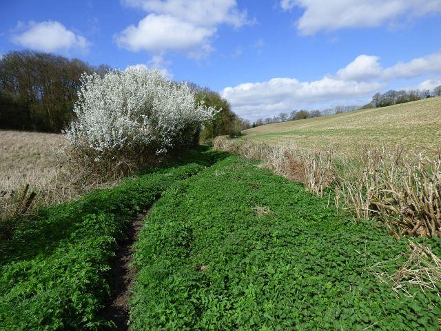 Farmland, Chepping Wycombe