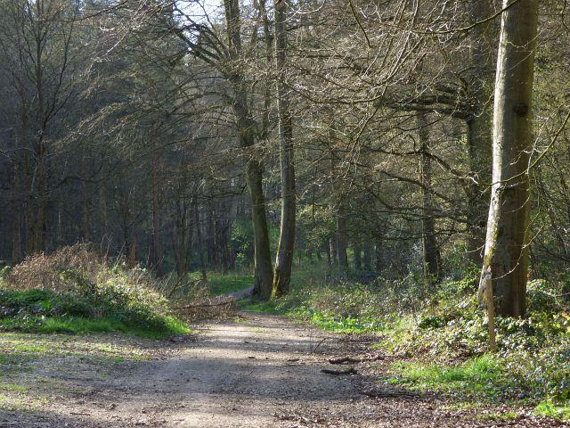 Woodland, Beaconsfield