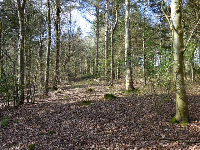 Woodland, Chalfont St Peter