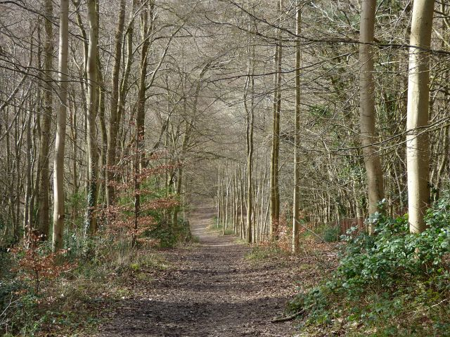 King's Wood, Chepping Wycombe