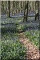 SP9714 : Bluebells in Dockey Woods, Hertfordshire by Christine Matthews