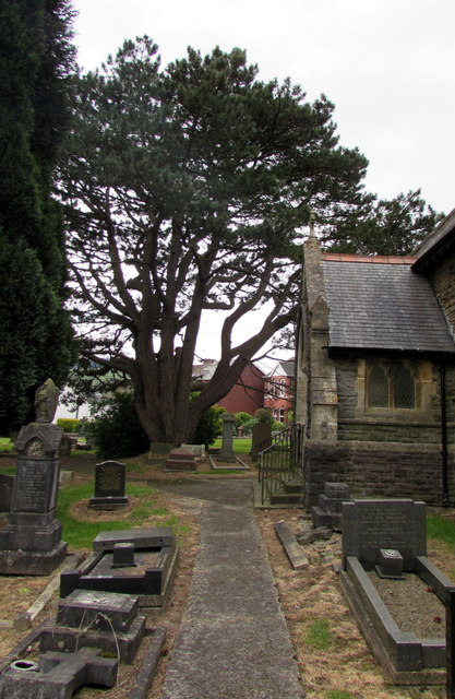 Yew in St John the Baptist churchyard, Rogerstone, Newport