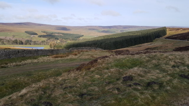 Above Allenheads