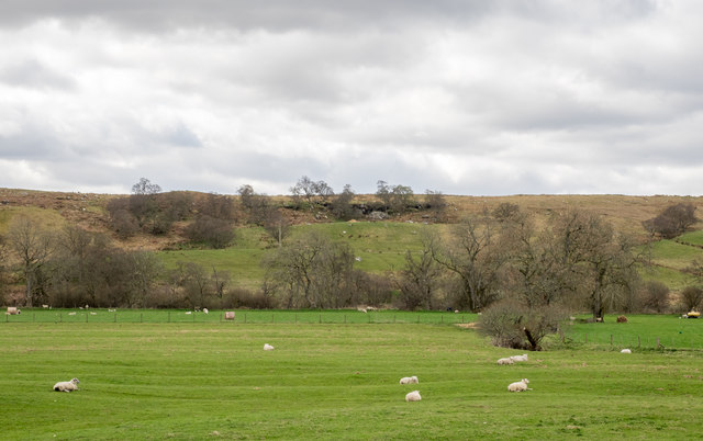 Sheep in Redesdale