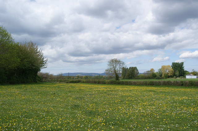 Pasture on the Shoreditch Road, Somerset