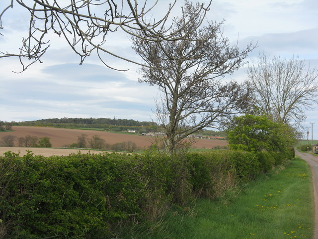 Hedgerow at Nether Hailes