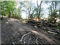 TQ1312 : Wood stack adjacent to bridleway by Peter Holmes