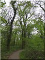 ST3523 : Nature trail in Swell Wood by David Smith