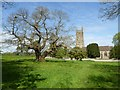 ST7093 : Chestnut tree and Tortworth church by Philip Halling