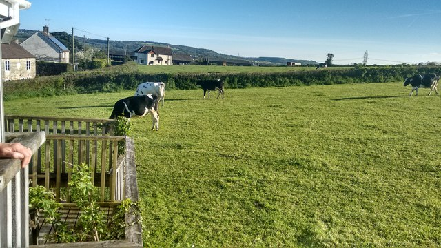 Cow field at the back of the Ridgeway Inn at Smallridge