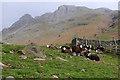 NY2706 : Sheep, Mickleden by Ian Taylor