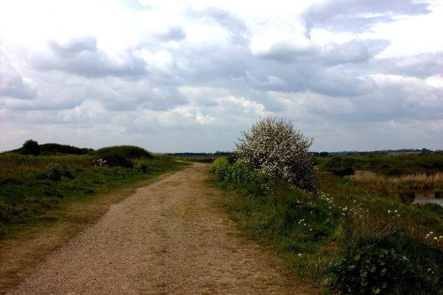 Essex Way looking southwards