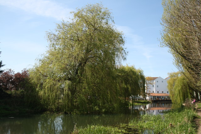 Upstream of Buxton Mill