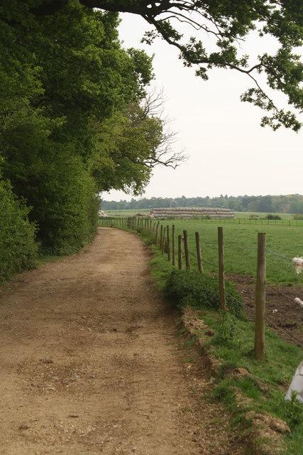 Farm Track beside Tindall Wood