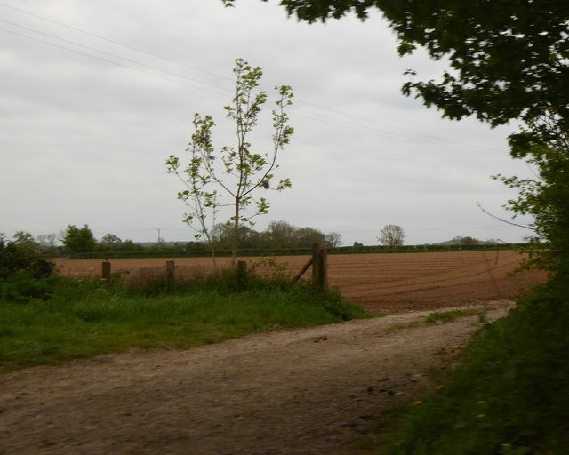 Newly ploughed field, edge of North Curry