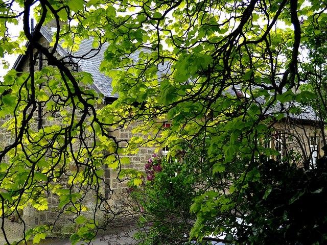 Below the Jubilee Tree, Heddon on the Wall