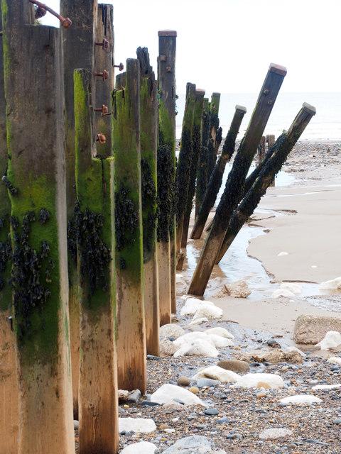 Groyne Posts on Spurn Point Beach