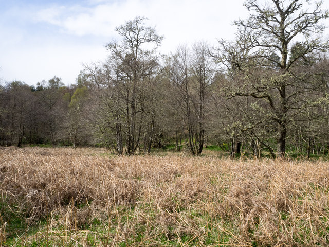 Dead bracken with trees beyond