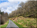 NN1581 : Steep slope with deciduous woodland by Trevor Littlewood