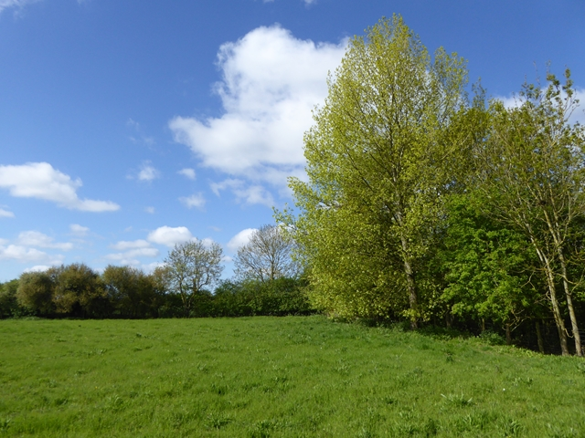 Martins' Meadows Nature Reserve