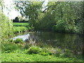 TL9059 : Pond, Bradfield St. George by JThomas